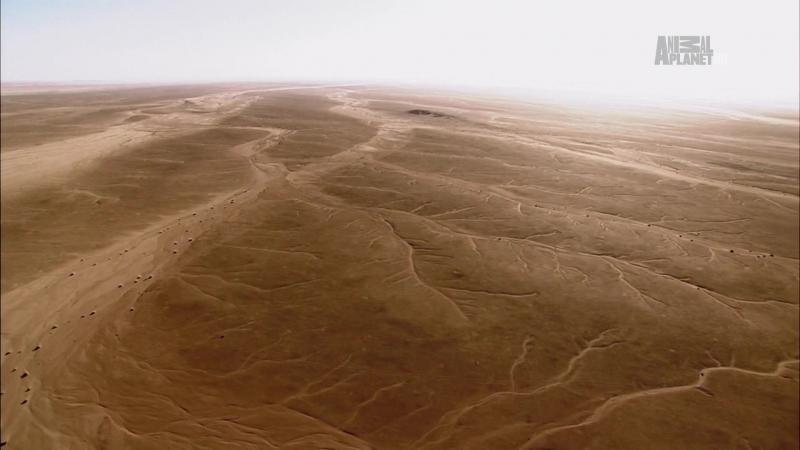 В дебрях Африки 2 серия Намибия Пески времени