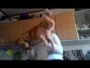 Кот любит танцевать с хозяйкой