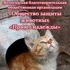 """Общество защиты животных """"Приют надежды"""" Вологда"""