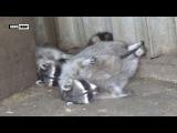 Зоопарк в поселке Придорожное оправился от войны и встречает гостей