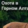 Охота в Горном-Алтае