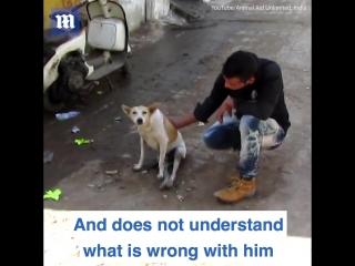Эти удивительные ветеринары помогли парализованной собаке снова ходить!