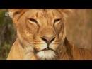 В дебрях Африки. ГОРА КЕНИЯ - ЛЕДЯНОЕ СЕРДЦЕ АФРИКИ