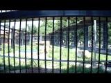 MAH02710В зоопарке