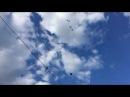 Торцовые голуби г.Россоши