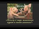 Почему в мире животных курят и пьют алкоголь Притча