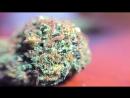 Таинственный сорт марихуаны