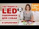 Светящиеся ошейники и брелоки для собак Большой обзор HAUL