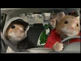 2010 Kia Soul Hamster CommercialBlack Sheep Kia Hamsters Video 480