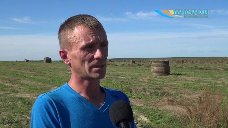 Аграрыі Магілёўскай вобласці пачалі ўздым лёну