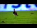 Животные на футбольном поле - Самые ржачные приколы в футболе