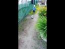 Video a0d864c9cd118fe288bc287d6db463c3