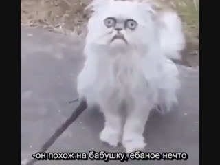 Субтитры к видео со злым котом  Рифмы и Панчи