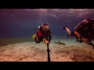 Детеныш акулы плавает с дайверами