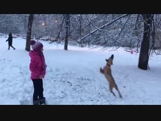 Служебный пограничный пёс по кличке Гриша очень рад такой погоде