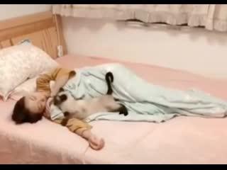 Леди и кошки