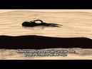 The Old Crocodile - El viejo Cocodrilo - 年をとった鰐 Toshi o Totta Wani de Koji Yamamura
