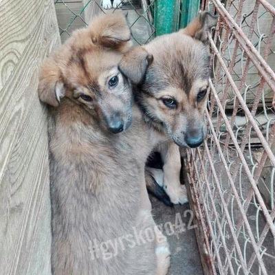 NEUTERED YOUNG MALE - Корм для собак и