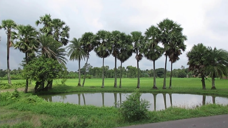 BEAUTIFUL SONAKHALI VILLAGE IN SUNDARBAN, SOUTH 24 PARGANAS, WEST BENGAL, INDIA