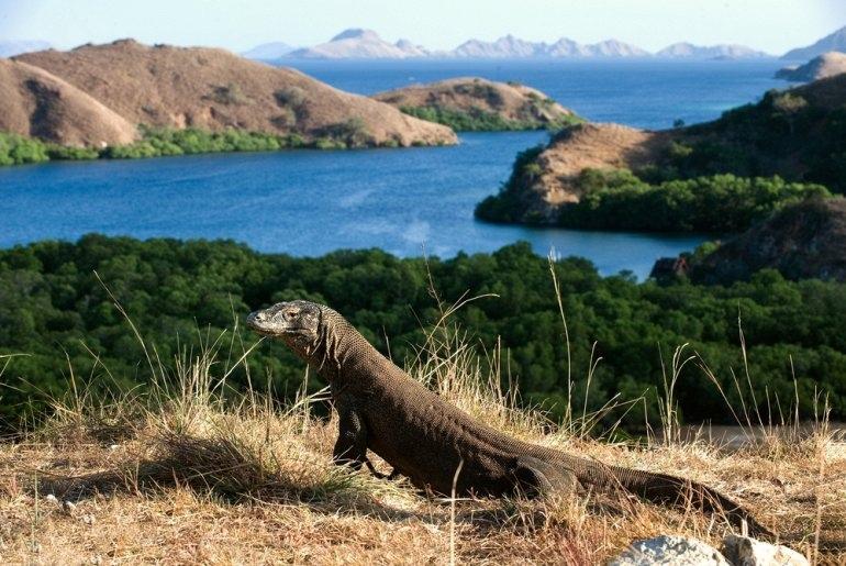 Национальный Парк Комодо в Индонезии, изображение №1