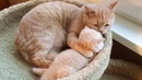 Mama Cat Cleaning Her Cute Baby Kitten