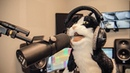 What´s New Pussycat (metal cover by Leo Moracchioli)