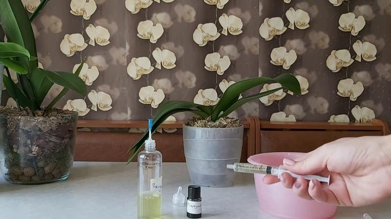 Ракетное топливо для орхидей Первый полив орхидеи с гнилью препаратоми Formulex и Nitrogen