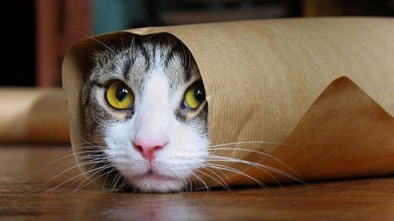 ПРИКОЛЫ С КОТИКАМИ ЛУЧШАЯ ПОДБОРКА 2019 FUNNY CATS