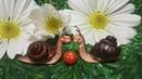 УЛИТКА из ИЗОЛОНА! ( Видео МК) Snail from izolon!