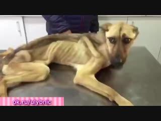 Парень спас и откормил истощённого пса До слез