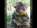 VID mandrill monkey art stuffed toy