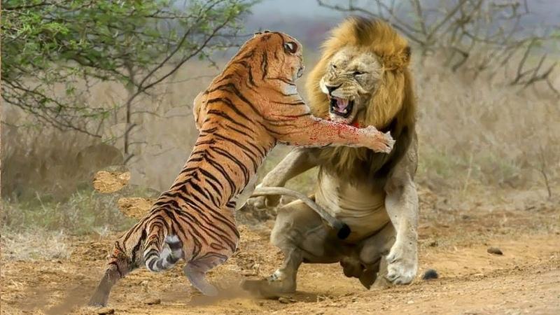 Sức mạnh giữa 2 chúa tể được thể hiện qua ống kính Ai là kẻ có sức mạnh hoàn hảo nhất động vật