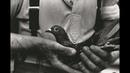 Çanakkale hayvan sevgisi güvercin