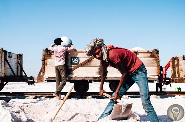 Один день сборщиков соли в Индии. Ч.-1 Солончаки озера Самбар являются самыми крупными в Индии. В сезон отсюда на переработку уходит три доверху груженых поезда в день. Это примерно 10 000 т