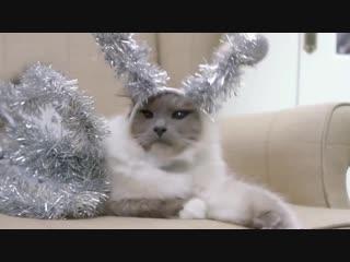 Рождество  это время чудес и добрых дел