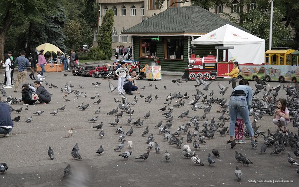 Голуби перед собором в Алматы, 2019