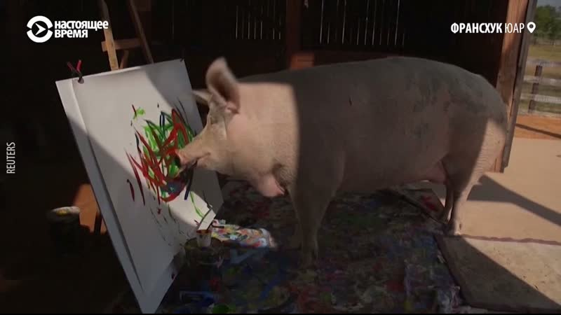 Свинья рисует картины Их продают отсылая деньги на благотворительность