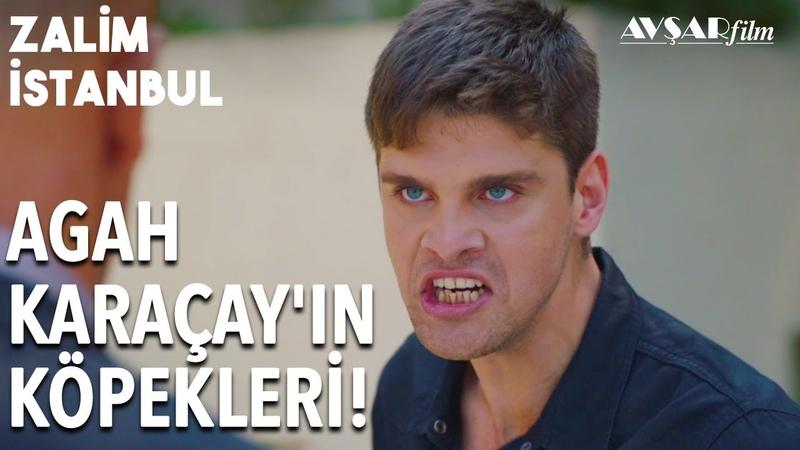 Civan Hesap Soruyor! Kardeşim Nerede Karaçay Köpekleri! | Zalim İstanbul 13. Bölüm
