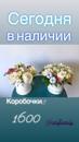 Vita Kachurova фотография #36