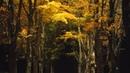Fall Foliage - 1,600W Drone Light