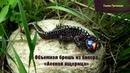 Мастер класс брошь из бисера Лесная ящерица Masterclass handmade brooch Lizard