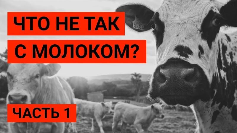 Почему веганы не пьют молоко? Влияние молочных продуктов на здоровье. Веган Влог 5