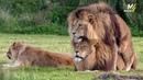 Гомосексуализм в мире животных