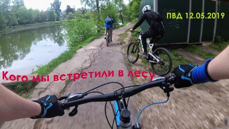 Велопокатушка в Ромашковском лесу с медведем 12 05 2019 ПВД 37 км