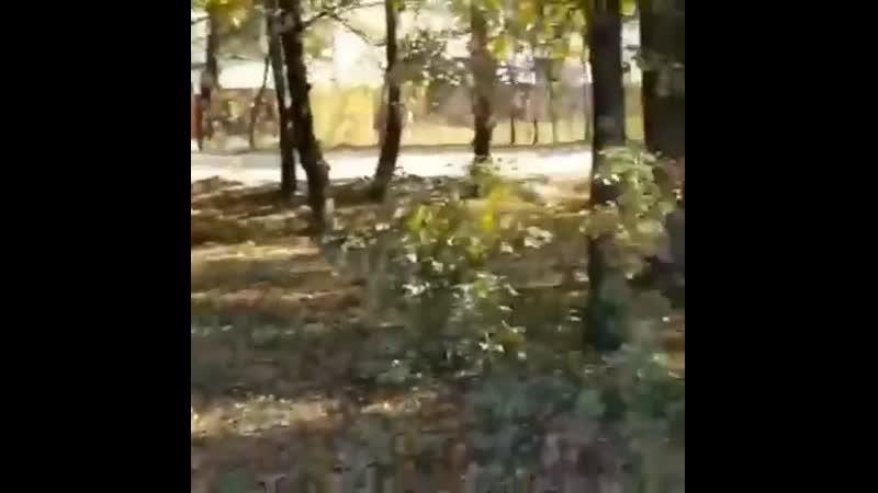 Краснодарцы вышли на народный сход противуничтожения деревьев под храм.mp4