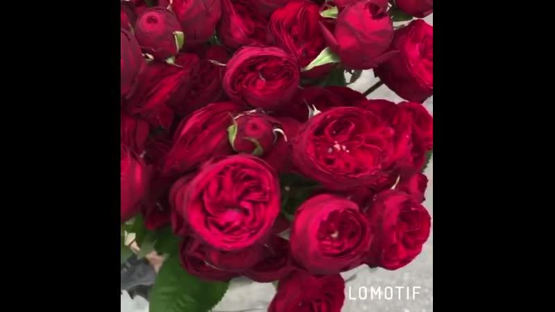 Работаем на ДоставкуНавынос😷🧤 В наличие всегда имеются необычные сорта удивительно- красивых цветов! Всегда для Вас Цветы Pro