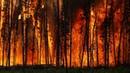 Ученый размышяет о лесных пожарах