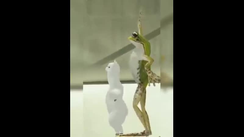 Танец с лягушкой 🍃Позитив