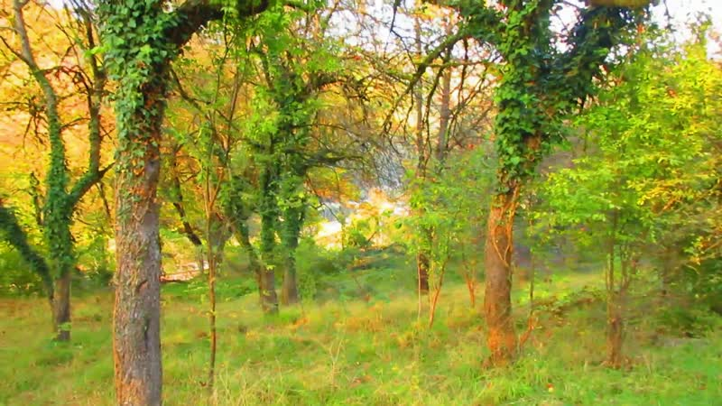Сочи Романтичные прогулки в яблоневом саду