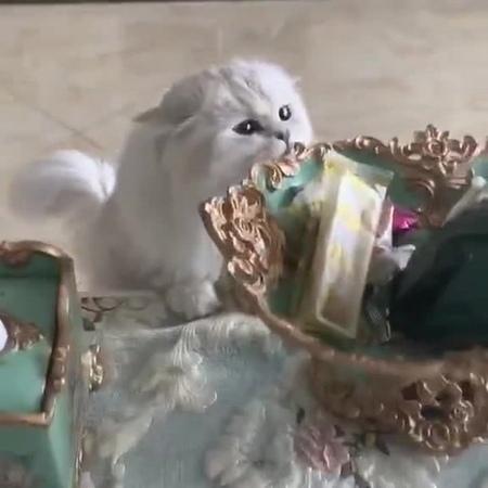 Snatch kitten